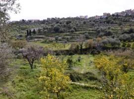 Terreno in contrada Bochini