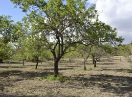 Piccolo terreno agricolo